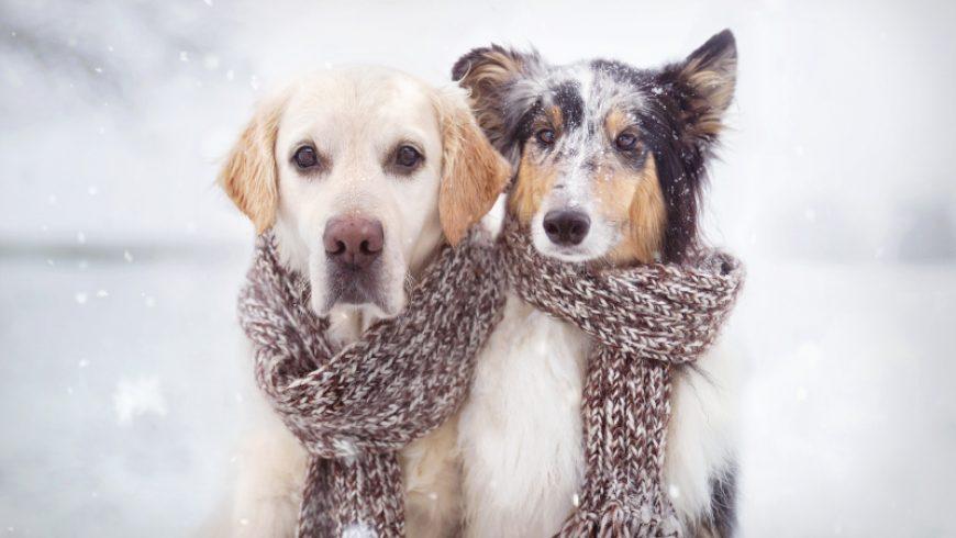 Dieren verzorgen in de winter dankzij deze tips!